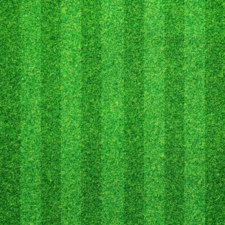 Groen gras achtergrond Stockfoto - 13711059