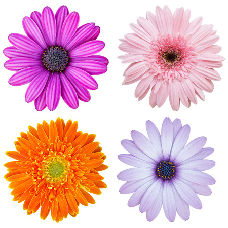 set of colorful flower isolated on white with clipping path photo