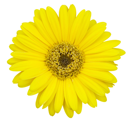 yellow gerbera isolated on: yellow gerbera flower isolated on white