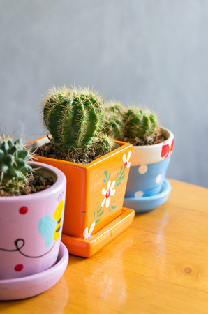 cactus plant in pots decoration on the table with concrete wall Stockfoto