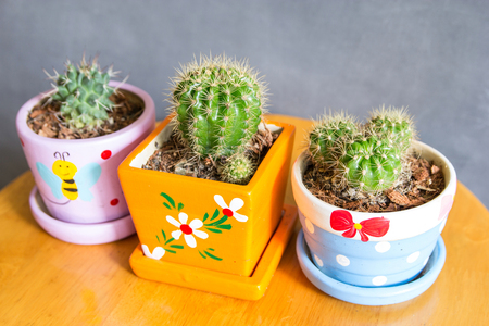 cactus plant in pots decoration on the table with concrete wall Standard-Bild