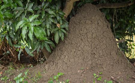 termite hill or termite mounds Stockfoto