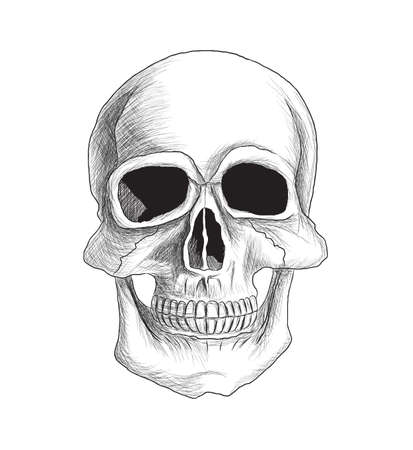 Very detailed skull vector illustration isolated on white  The contour and details are separated on different layers