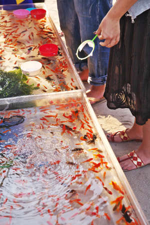 goldfishes: Game of catching goldfishes was over