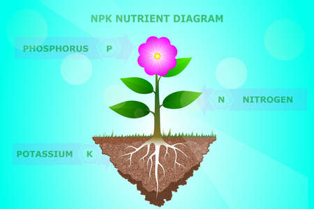 NPK Nutrient diagram of plant or tree Illustration