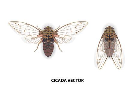 Cicadas vector on white background