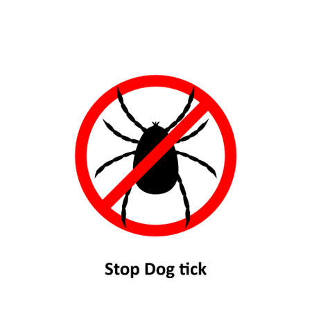 Stop dog tick on a white background Bite the pet Is an insect species The life cycle of an egg is an embryo for an adult teenager.