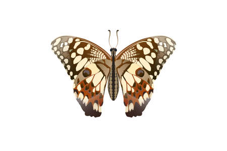Butterfly on the top side and eating nectar from flowers Vector on a white background Imagens - 129151276
