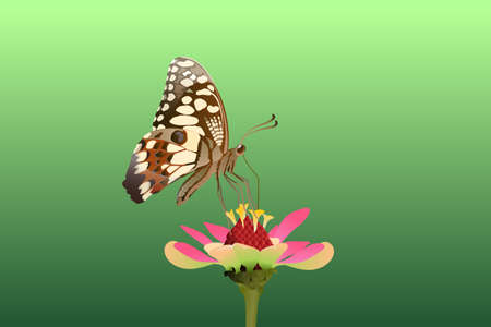 Butterfly on the top side and eating nectar from flowers Vector on a white background Imagens - 129151282