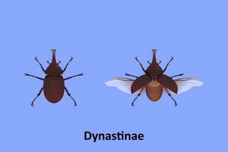 Dynastinae vector on blue background isolated