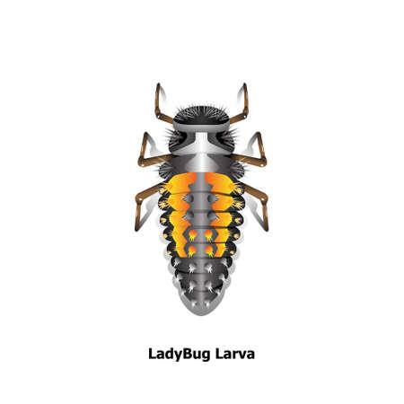 Vector de objeto de larva de mariquita sobre fondo blanco.