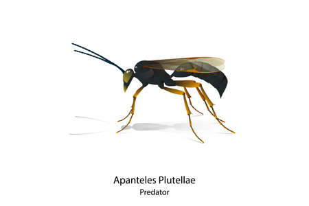 Apanteles Plutellae vector is predator insect for rid Pest.