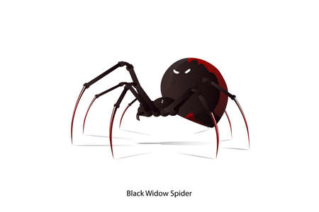 Black Widow Spider vector on white background.This picture is option for graphic design,education,science,agriculture.