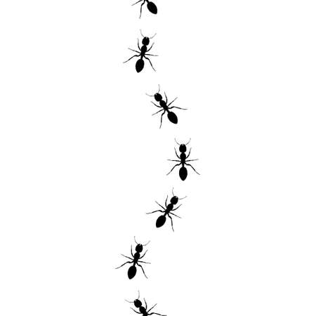Ants walking in a line pattern in black and white Vetores
