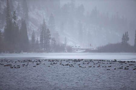 Winter season at Mammoth lake, California, USA 版權商用圖片