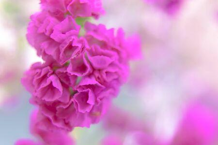 추상 꽃 배경, blurr 꽃과 컬러 필터와 배경으로 만든