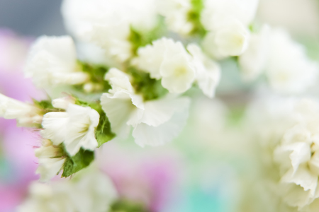 abstract flower background,made by blurr flower and background with color filters Stock Photo