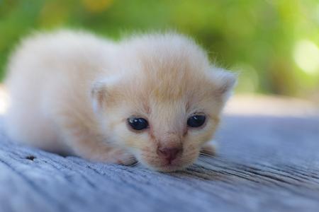 나무 바닥, 선택적 및 소프트 포커스에 귀여운 작은 고양이 스톡 콘텐츠 - 78496521
