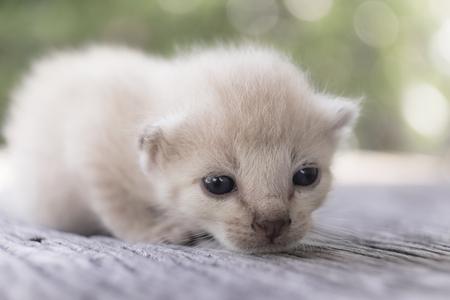 나무 바닥, 선택적 및 소프트 포커스에 귀여운 작은 고양이 스톡 콘텐츠 - 78496514