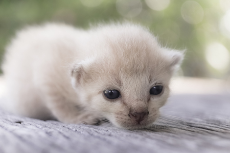 Cute little cat on wooden floor,selective and soft focus Imagens - 78496514