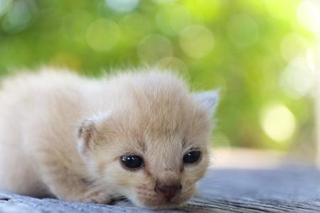 나무 바닥, 선택적 및 소프트 포커스에 귀여운 작은 고양이 스톡 콘텐츠 - 78496523