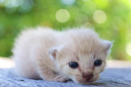 나무 바닥, 선택적 및 소프트 포커스에 귀여운 작은 고양이 스톡 콘텐츠 - 78496522