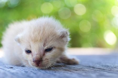 나무 바닥, 선택적 및 소프트 포커스에 귀여운 작은 고양이 스톡 콘텐츠 - 78496528