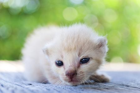 나무 바닥, 선택적 및 소프트 포커스에 귀여운 작은 고양이 스톡 콘텐츠 - 78496530