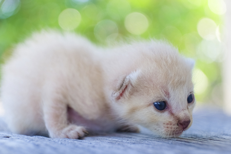 cute little cat on wooden floor,selective and soft focus Imagens - 78496535
