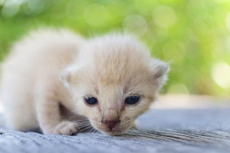 나무 바닥, 선택적 및 소프트 포커스에 귀여운 작은 고양이