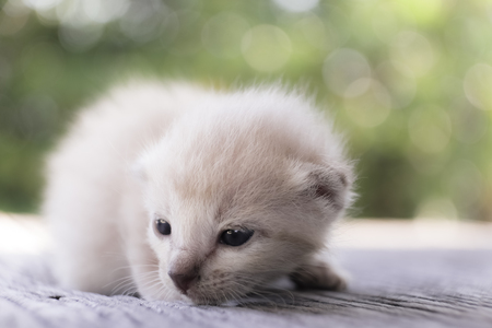 cute little cat on wooden floor,selective and soft focus Imagens