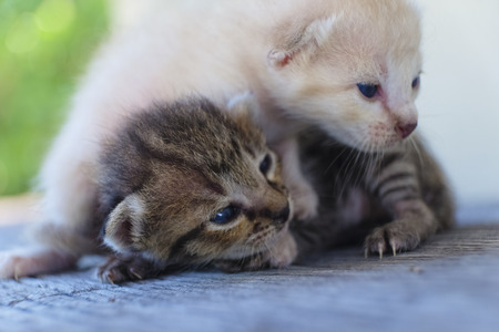 Two cute cats playing together,soft focus Imagens - 78496534