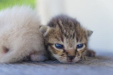 함께, 소프트 포커스 두 귀여운 고양이 재생 스톡 콘텐츠 - 78496538