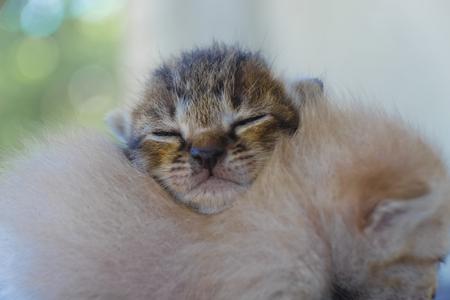 작은 고양이가 잠들 것이다.