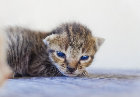 Cute little cat on wooden floor,selective and soft focus
