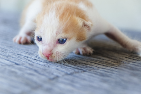 cute little cat on wooden floor,selective and soft focus Imagens - 78496561