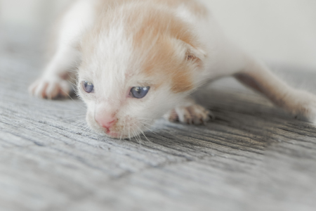 cute little cat on wooden floor,selective and soft focus Imagens - 78496571