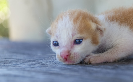 cute little cat on wooden floor,selective and soft focus Imagens - 78496573