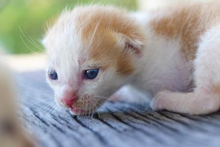 나무 바닥, 선택적 및 소프트 포커스에 귀여운 작은 고양이 스톡 콘텐츠 - 78496565