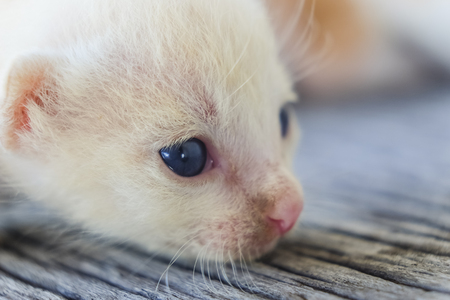 Cute little cat on wooden floor,selective and soft focus Imagens - 78496567