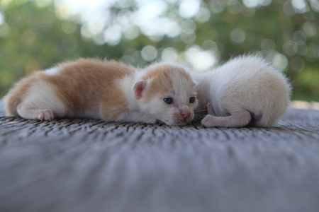 Two cute cats playing together,soft focus Imagens - 78496575