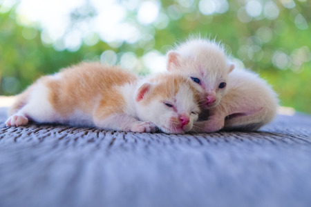 Two cute cats playing together,soft focus Imagens - 78496576