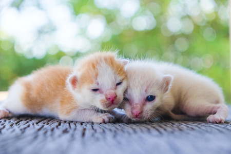 Two cute cats playing together,soft focus Imagens - 78496579