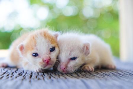 함께, 소프트 포커스 두 귀여운 고양이 재생 스톡 콘텐츠