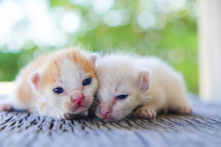 Two cute cats playing together,soft focus
