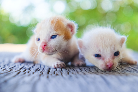 Two cute cats playing together,soft focus Imagens - 78496585