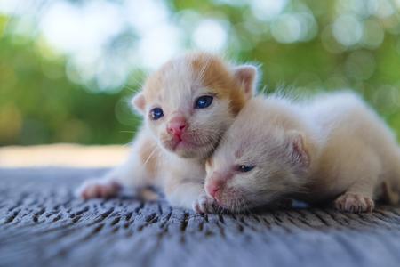 함께, 소프트 포커스 두 귀여운 고양이 재생 스톡 콘텐츠 - 78496630