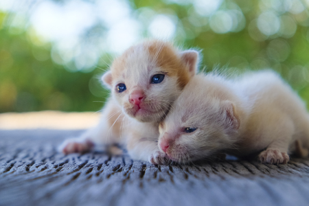 Two cute cats playing together,soft focus Imagens - 78496630