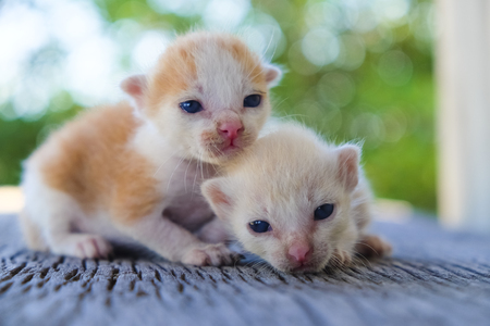 Two cute cats playing together,soft focus Imagens - 78496587
