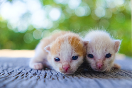 Two cute cats playing together,soft focus Imagens - 78496632